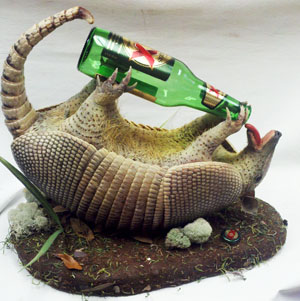 Armadillo Drinking Beer